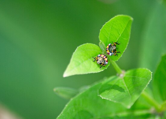 Two Bugged To Bother by Shaun Colin Bell