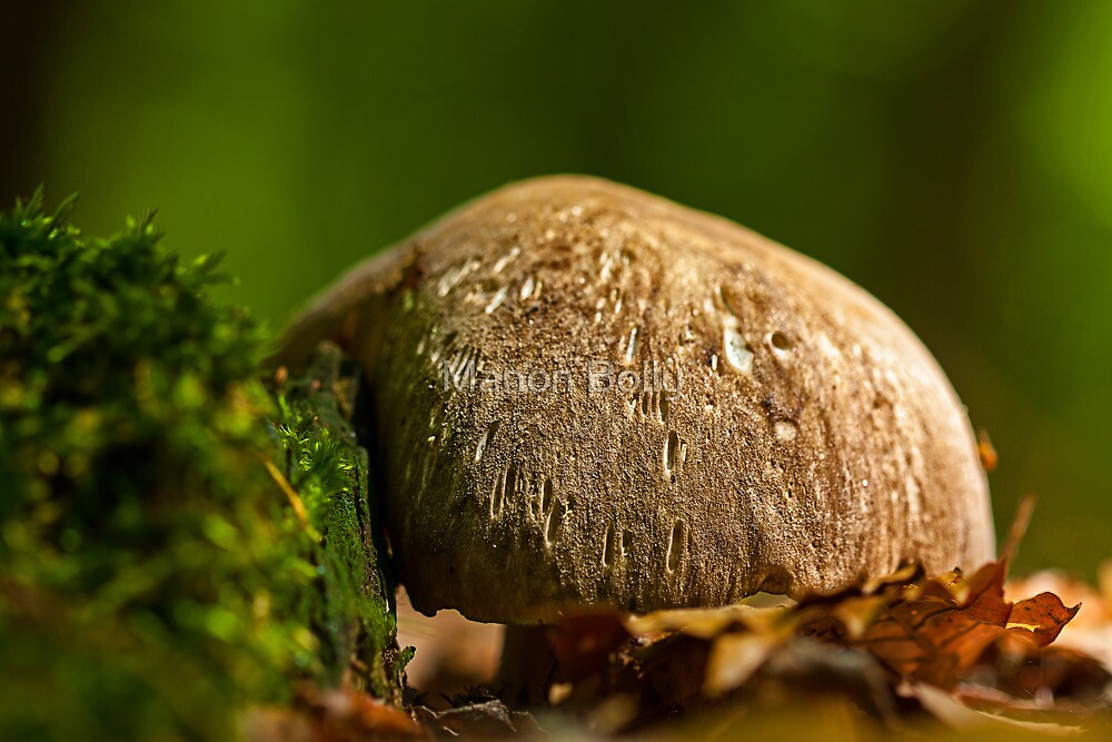 dome shroom by Manon Boily