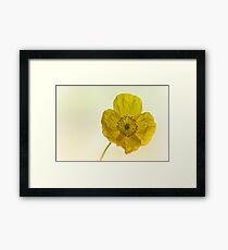 Dreamy Yellow Poppy Framed Print