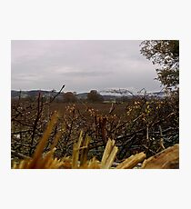 Autumn Hedgerows - the rural road Photographic Print