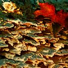 shrooms and leaf by Manon Boily