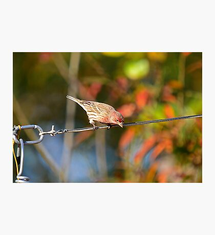 Man and Nature in the Backyard Photographic Print