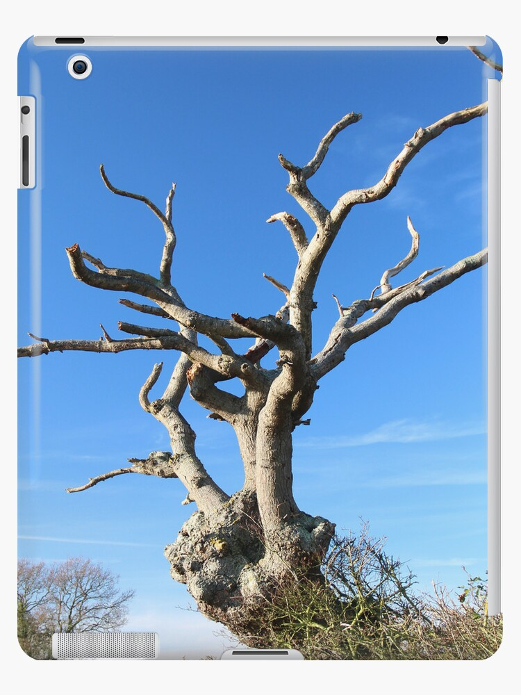 Old Tree iPad/iPhone Case by MelTho
