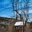 The tree house by Penny Fawver