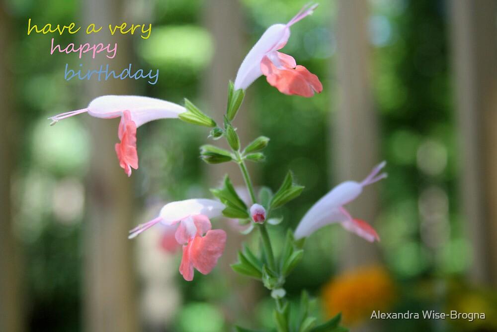 Happy Birthday Soft  by Alexandra Wise-Brogna