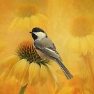 Little Chickadee by swaby