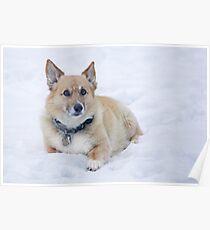 """Enough Snow Pictures Already . . "" Poster"