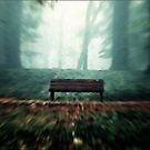 The Bench by wil45