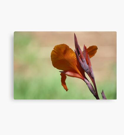 Flower in Adelaide Zoo Canvas Print