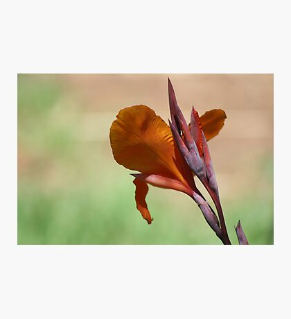 Flower in Adelaide Zoo Photographic Print