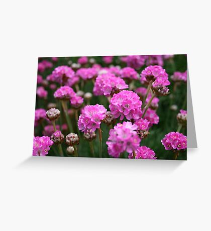Flower bed in Yarmouth Greeting Card