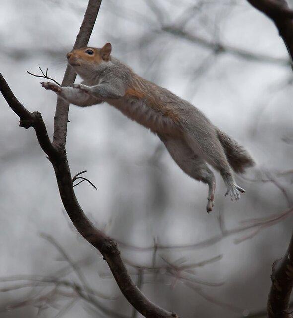 flying squirrel by ALEX GRICHENKO