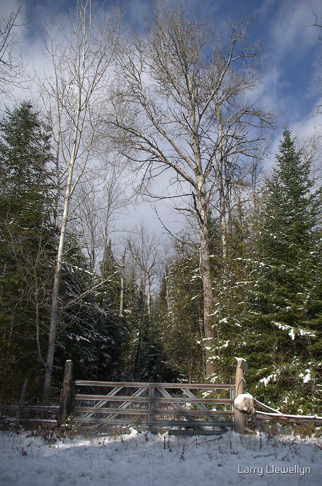 A Winter Scene........... by Larry Llewellyn
