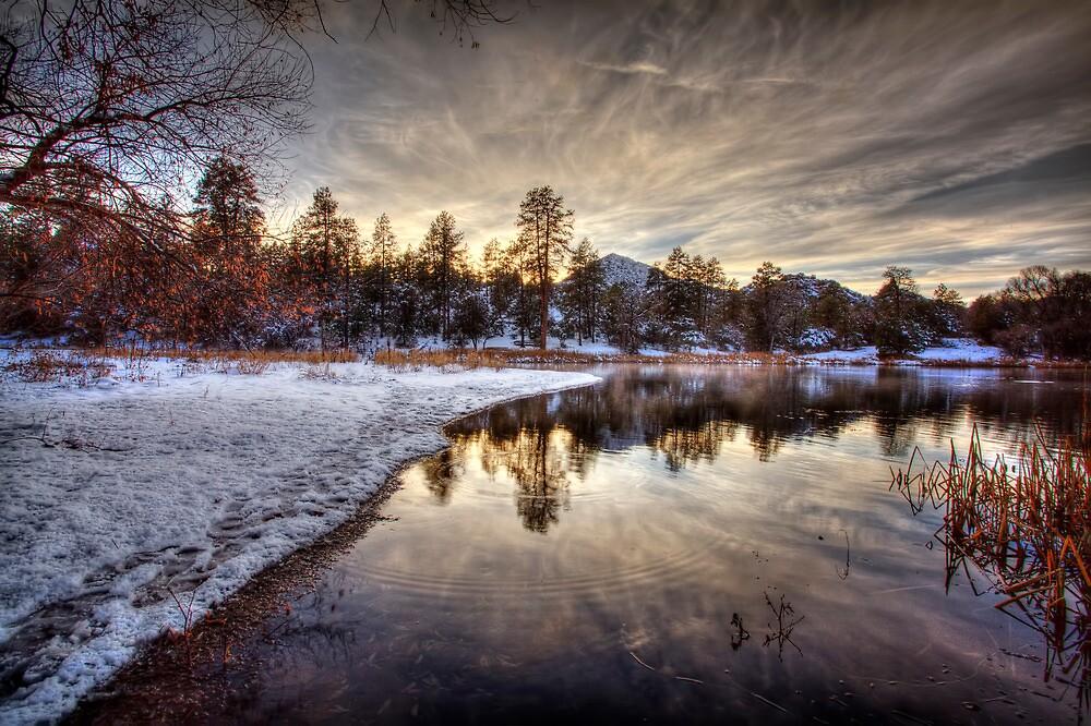 Cold Shore by Bob Larson
