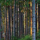 Sunset in the forest by Rainydayphotos