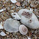 Shells by cathywillett