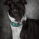 Greyhound 2 by Mark Cooper