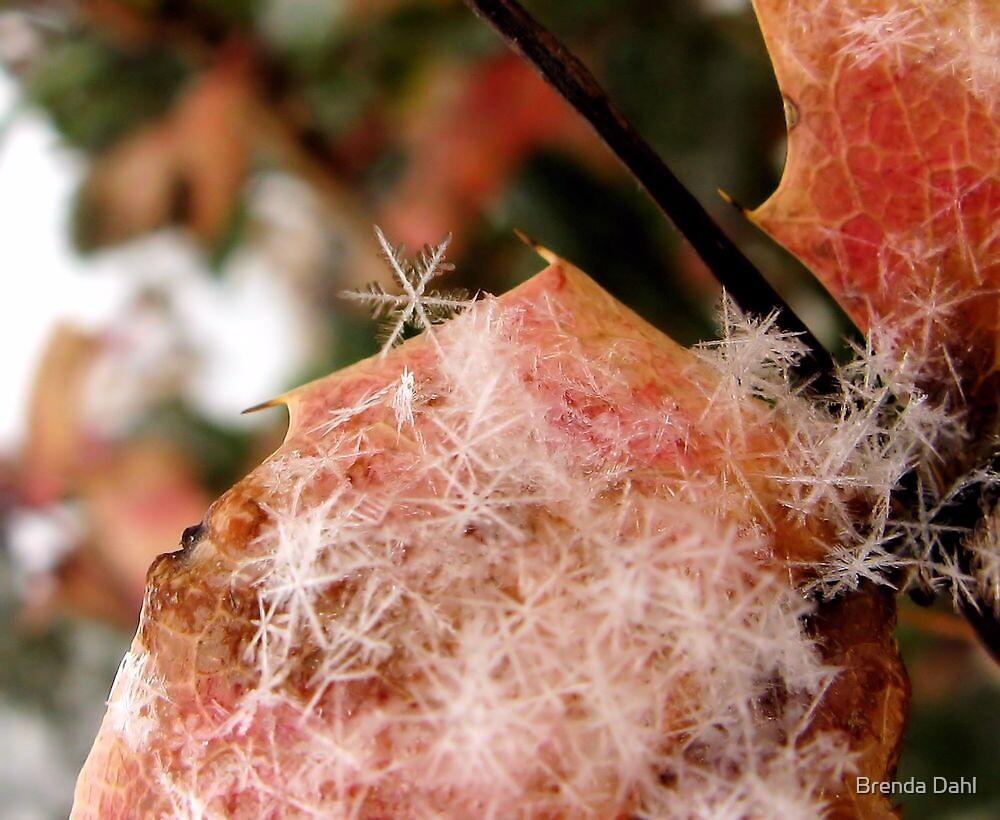 Snow Flakes by Brenda Dahl
