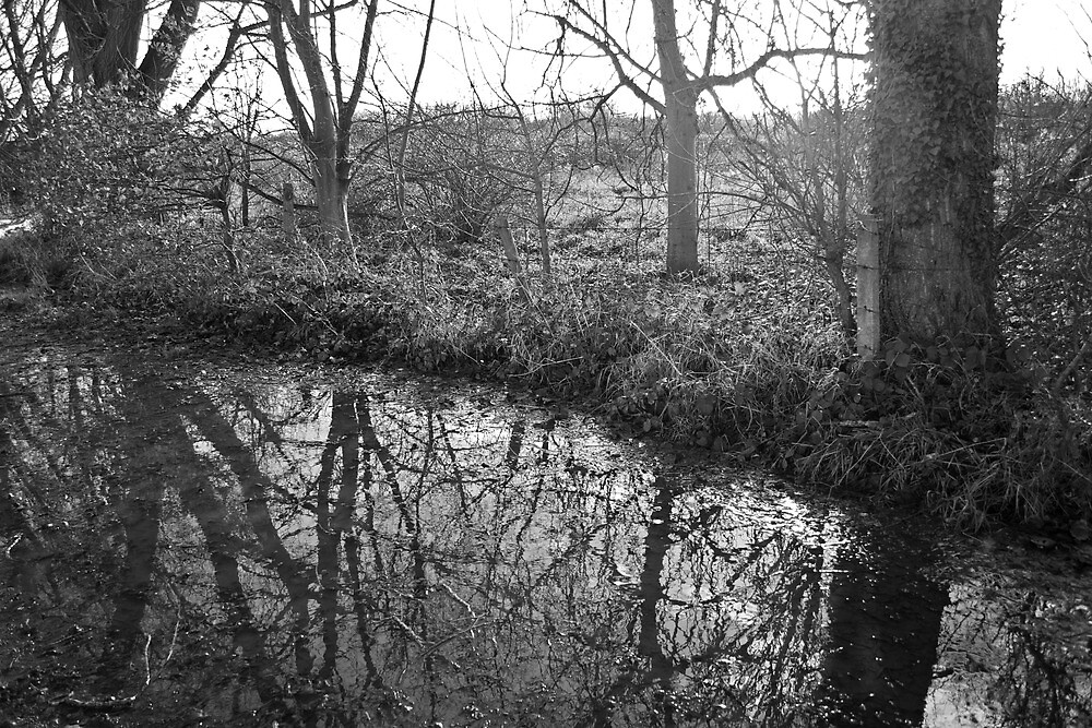 Reflections 2 by James Taylor
