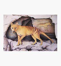 Tasmanian Tiger (Thylacine) Photographic Print