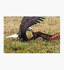 Vancouver Island Bald Eagle Photographic Print