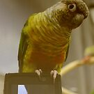 Mr. Parrot   Riverhead, New York  by © Sophie W. Smith