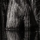 Cypress Trunk by Jim Haley