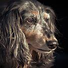 Faithful Old Girl by Randy Turnbow