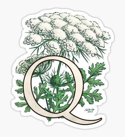 Q is for Queen Anne's Lace  Sticker