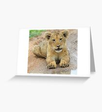 I am just adorable ,but i am wild !! Greeting Card