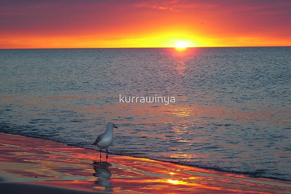 I seeagull sunset.. by Penny Kittel
