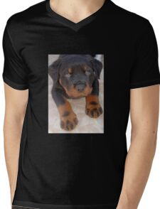 Young Male Rottweiler Making Eye Contact T-Shirt