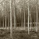 Duskie Wood - Vintage by mps2000