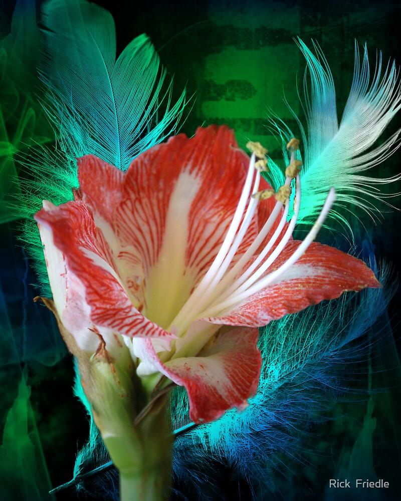 Feathered Amaryllis by Rick  Friedle