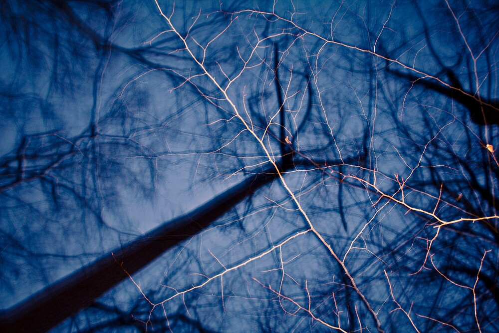 Ghostly Branches by Christopher Boscia
