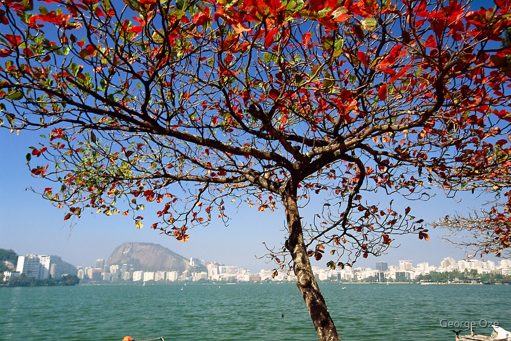 Tree along the Lagoon by George Oze