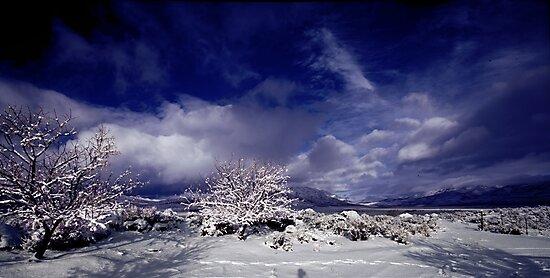 Palomino Valley North by SB  Sullivan