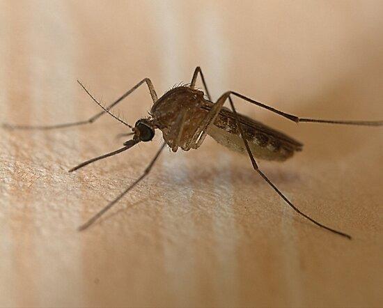 ~Mosquito~ by Debra LINKEVICS