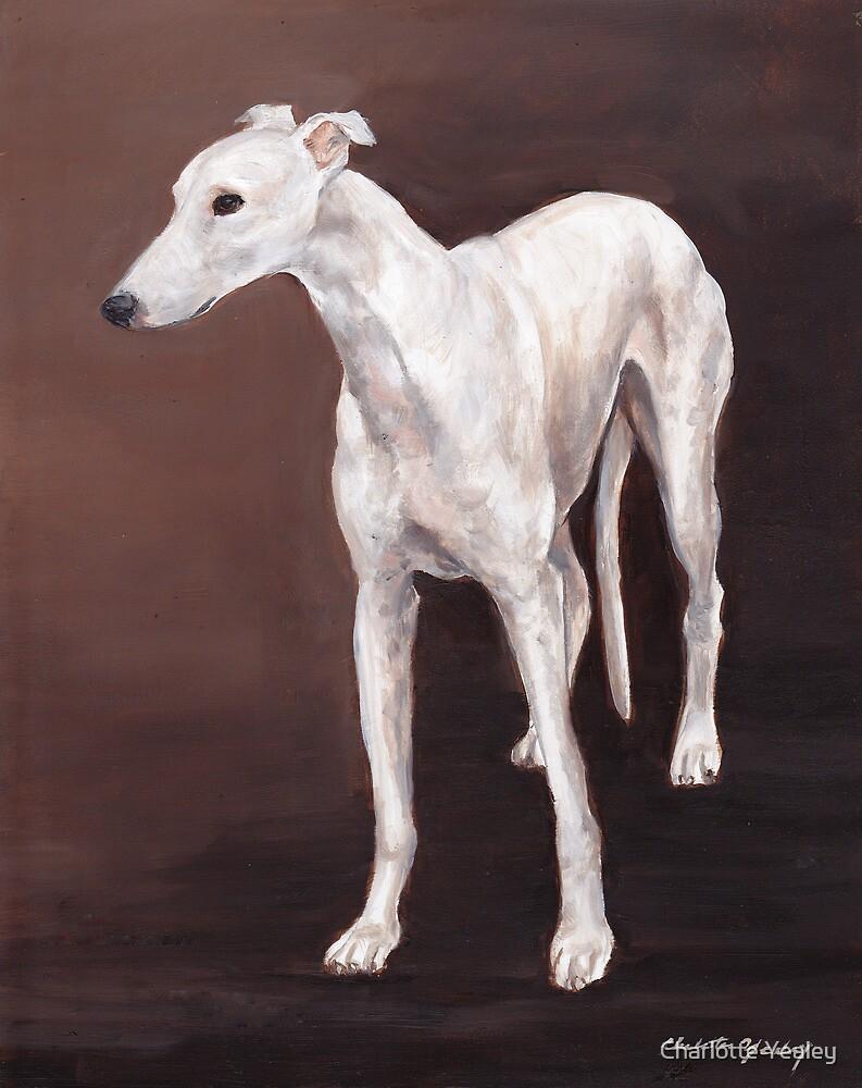 White greyhound by Charlotte Yealey