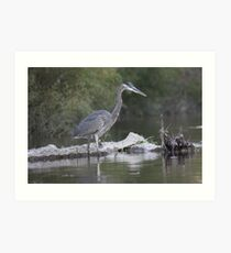 Great Blue Heron on Milwaukee River Art Print