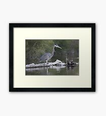Great Blue Heron on Milwaukee River Framed Print