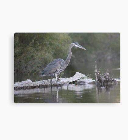 Great Blue Heron on Milwaukee River Metal Print