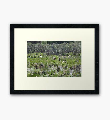 Sandhill Crane Habitat Framed Print