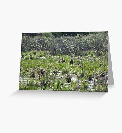 Sandhill Crane Habitat Greeting Card