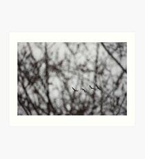 Sandhill Cranes in Whitefish Bay Wisconsin Art Print