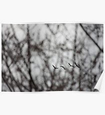 Sandhill Cranes in Whitefish Bay Wisconsin Poster