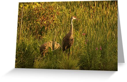 Sandhill Cranes on shore of Lake by Thomas Murphy