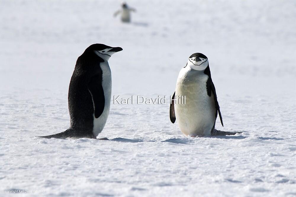 Penguin 013 by Karl David Hill