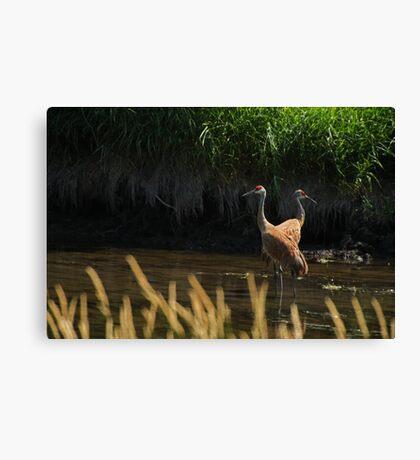 Sandhill Cranes Wading Canvas Print