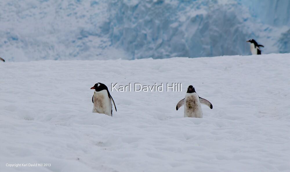 Penguin 025 by Karl David Hill
